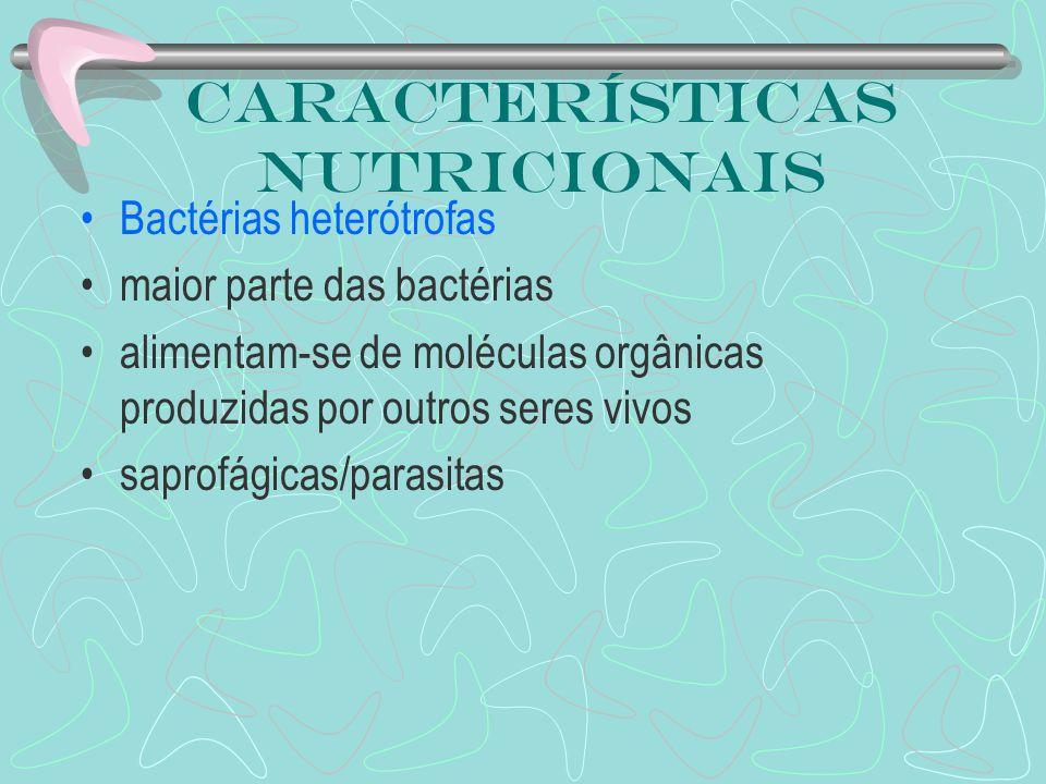 Características nutricionais Bactérias heterótrofas maior parte das bactérias alimentam-se de moléculas orgânicas produzidas por outros seres vivos sa