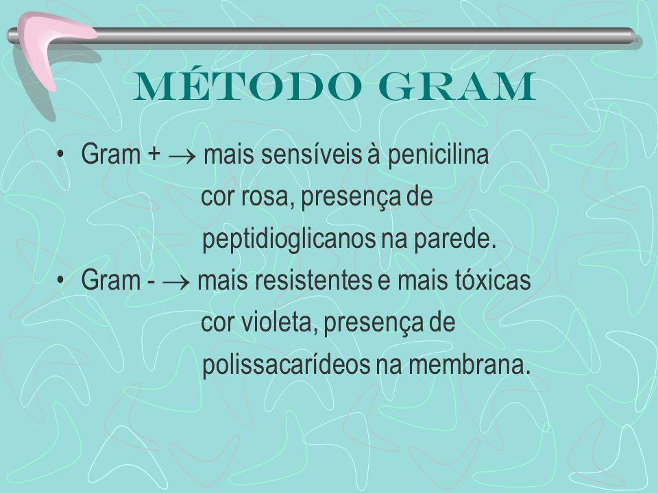 Método Gram Gram + mais sensíveis à penicilina cor rosa, presença de peptidioglicanos na parede. Gram - mais resistentes e mais tóxicas cor violeta, p