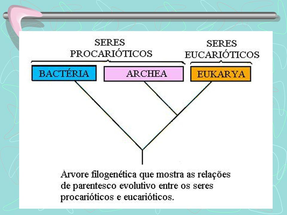 Organização interna da célula bacteriana parede celular (forma e proteção) membrana plasmática citoplasma com ribossomos cromossomo circular (nucleóide) plasmídeo vantagem cápsula bacteriana (proteção extra)