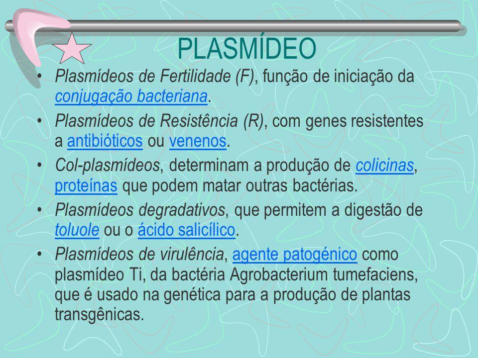 PLASMÍDEO Plasmídeos de Fertilidade (F), função de iniciação da conjugação bacteriana. conjugação bacteriana Plasmídeos de Resistência (R), com genes