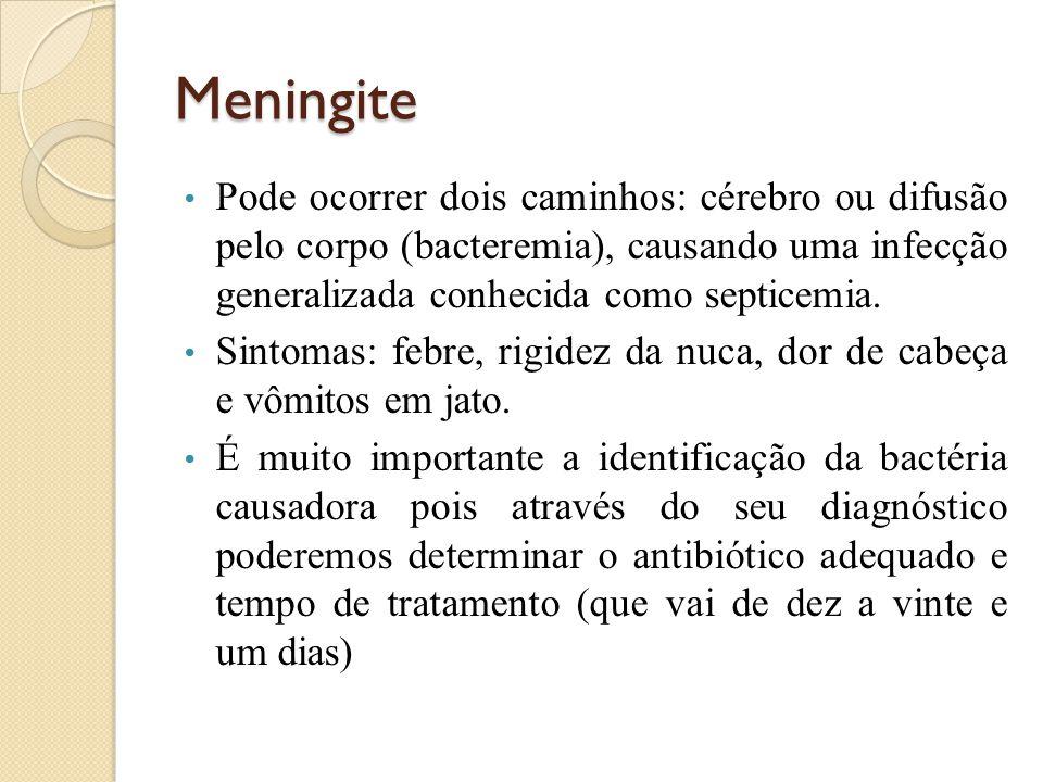 Meningite Pode ocorrer dois caminhos: cérebro ou difusão pelo corpo (bacteremia), causando uma infecção generalizada conhecida como septicemia. Sintom