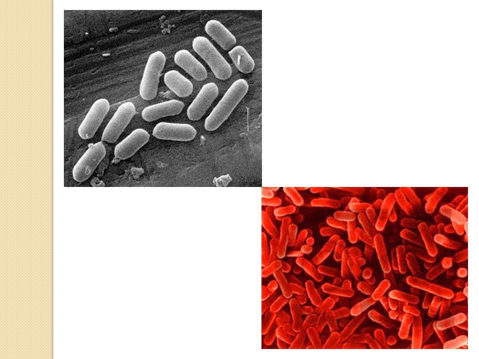 Importância das Bactérias Quando falamos em bactérias, em geral as associamos a doenças.