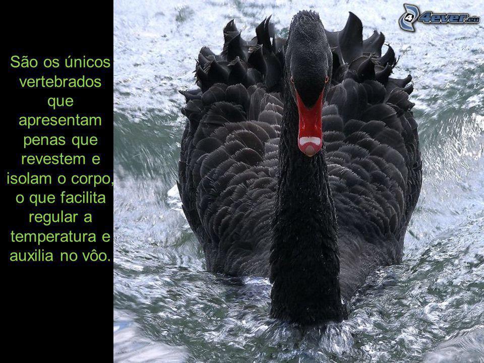 Passeriformes: as espécies pertencentes a esta ordem correspondem a mais de metade das aves vivas atuais..