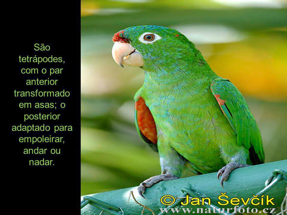 As aves granívoras apresentam moela e papo, que são pouco desenvolvidos ou mesmo ausentes nas aves carnívoras e frutívoras.