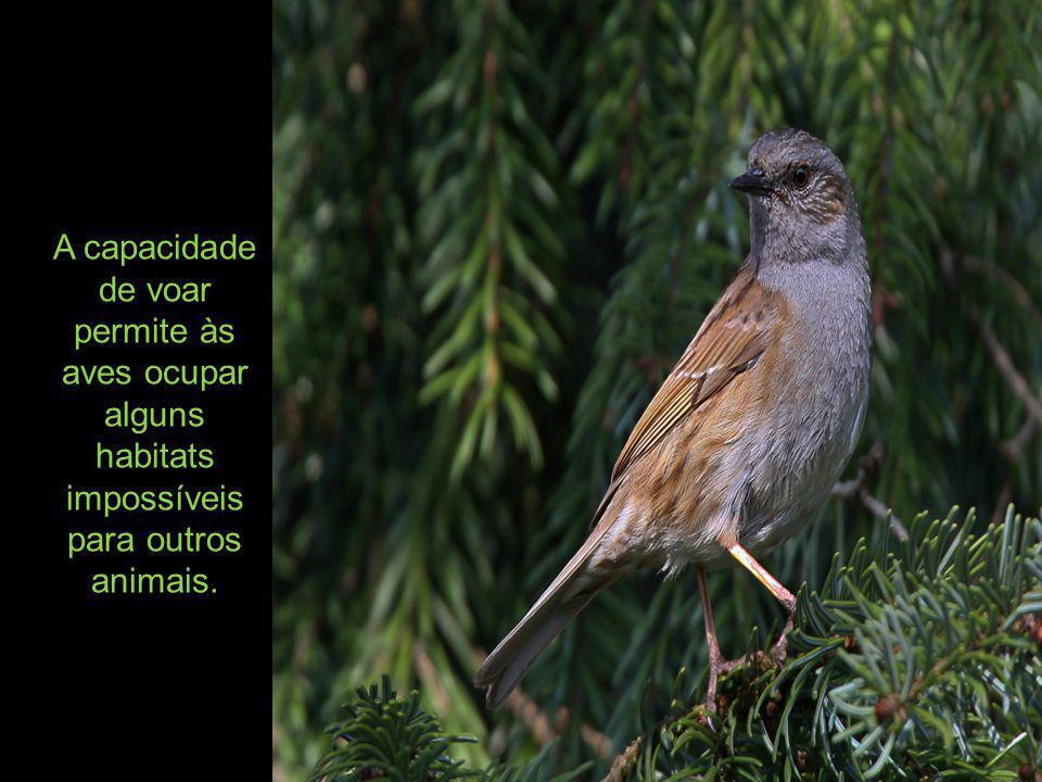 Sistema nervoso: o cérebro das aves é mais desenvolvido que o dos répteis; apresentam sistema nervoso central e periférico com doze pares de nervos cranianos.