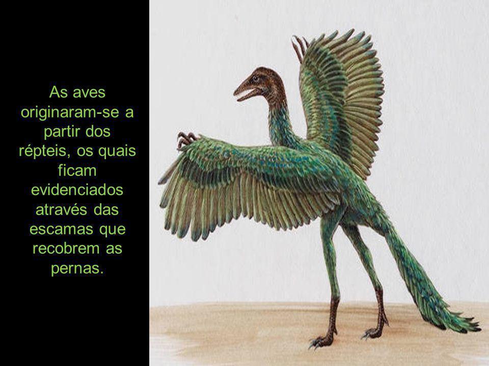 A mais antiga ave conhecida é a ave-lagarto, animal do tamanho de uma pomba