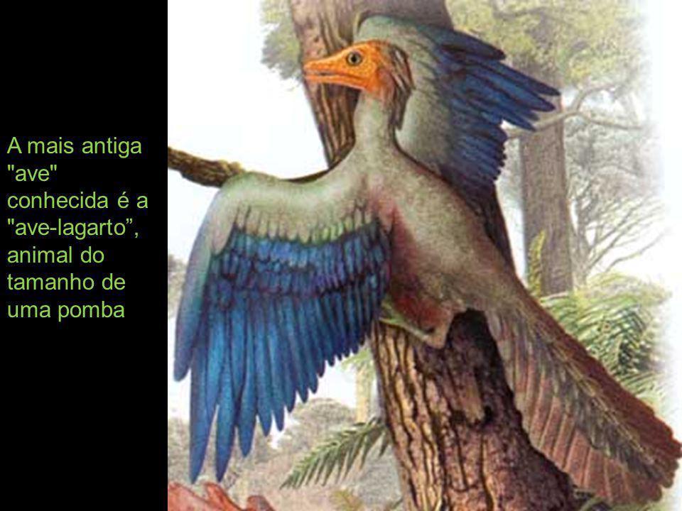Havia controvérsias para saber quem surgiu primeiro: as aves ou as penas.