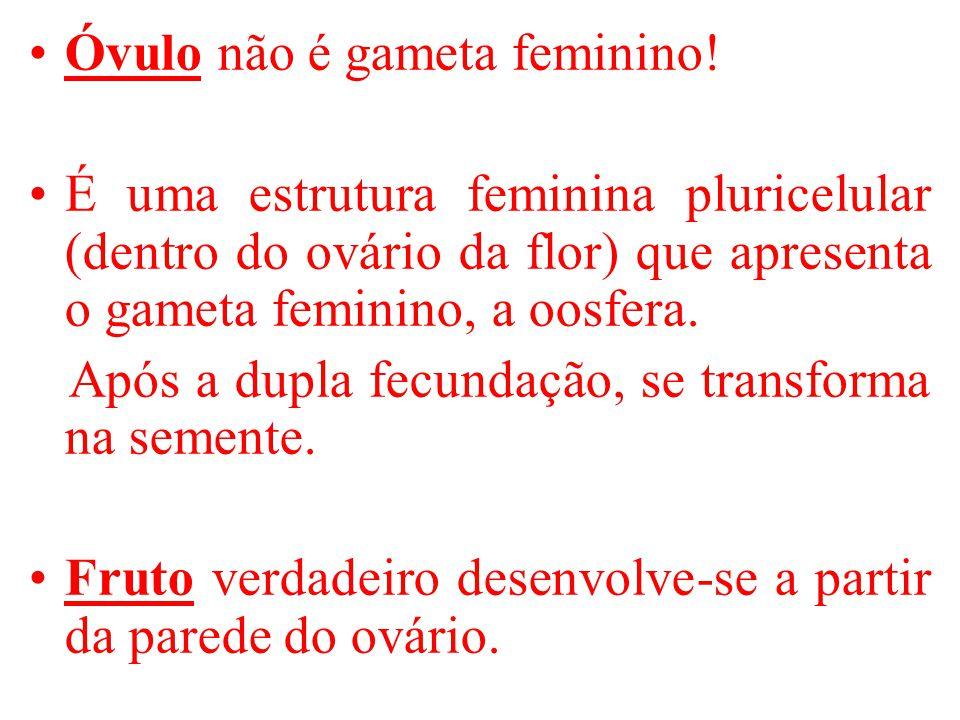 Óvulo não é gameta feminino.
