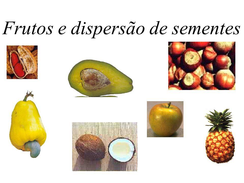 Frutos e dispersão de sementes