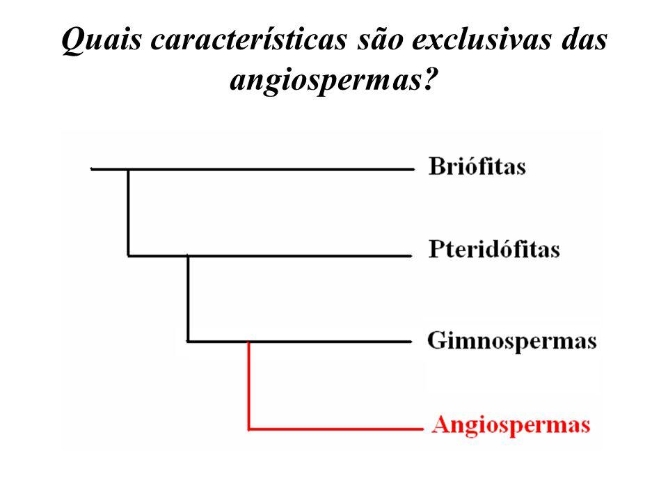 Quais características são exclusivas das angiospermas?