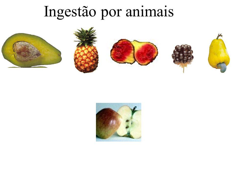 Ingestão por animais