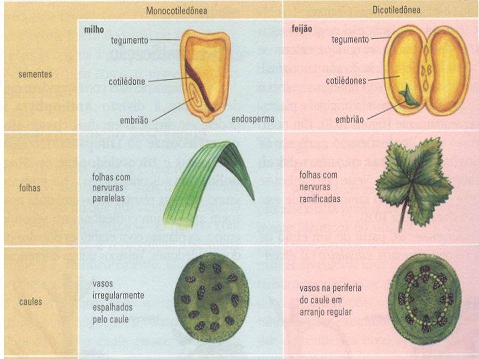 Formação do fruto simples Fruto com várias sementes