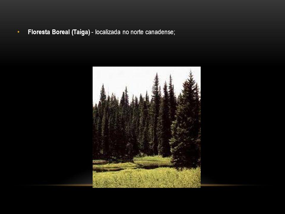 Floresta Boreal (Taiga) - localizada no norte canadense;
