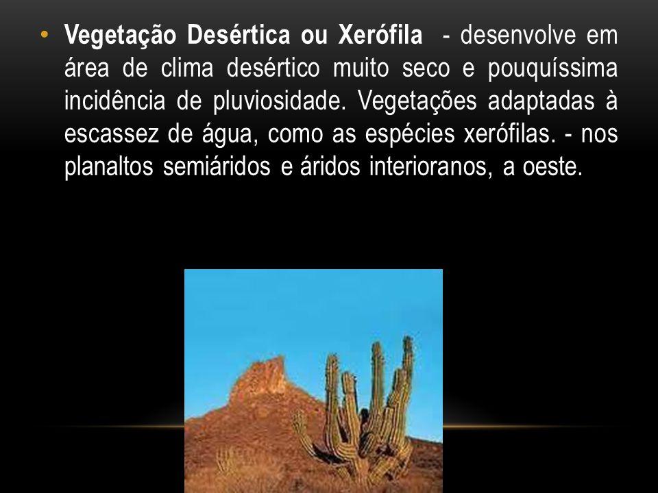 Vegetação Desértica ou Xerófila - desenvolve em área de clima desértico muito seco e pouquíssima incidência de pluviosidade. Vegetações adaptadas à es