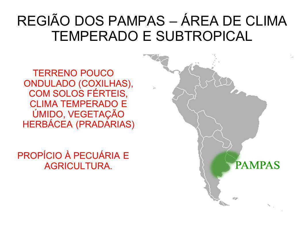 TERRENO POUCO ONDULADO (COXILHAS), COM SOLOS FÉRTEIS, CLIMA TEMPERADO E ÚMIDO, VEGETAÇÃO HERBÁCEA (PRADARIAS) PROPÍCIO À PECUÁRIA E AGRICULTURA. REGIÃ