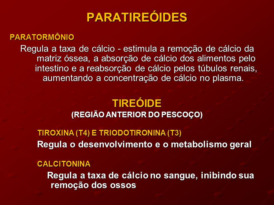 PARATIREÓIDESPARATORMÔNIO Regula a taxa de cálcio - estimula a remoção de cálcio da matriz óssea, a absorção de cálcio dos alimentos pelo intestino e a reabsorção de cálcio pelos túbulos renais, aumentando a concentração de cálcio no plasma.