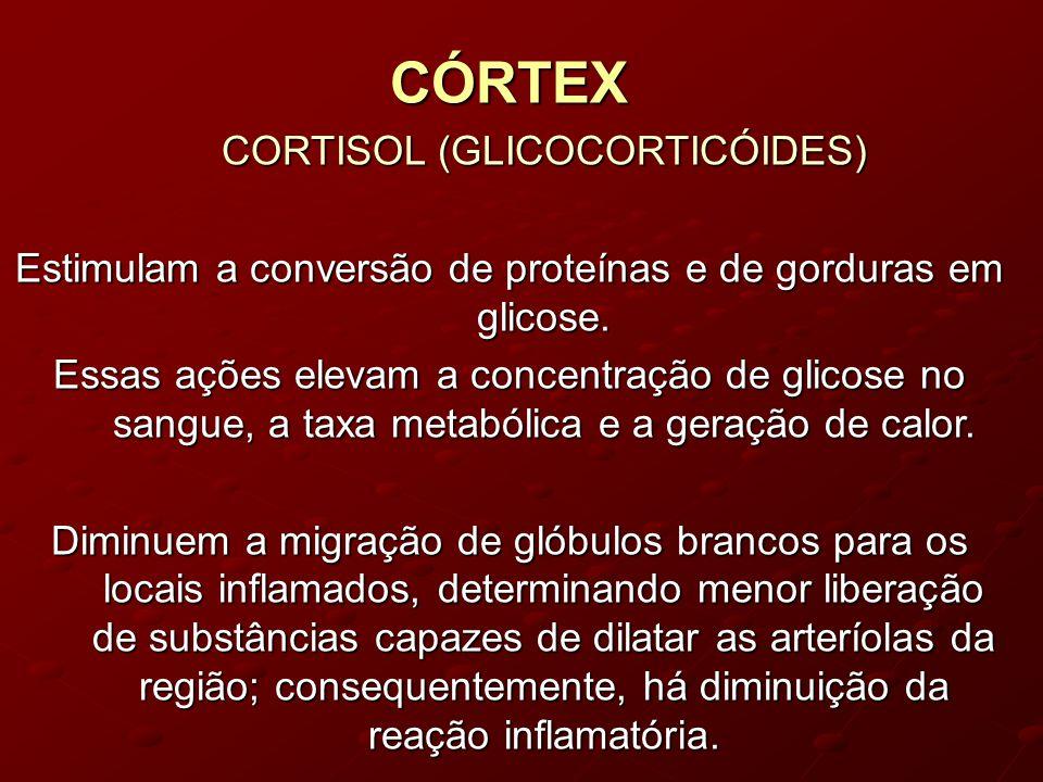 CÓRTEX CORTISOL (GLICOCORTICÓIDES) CORTISOL (GLICOCORTICÓIDES) Estimulam a conversão de proteínas e de gorduras em glicose.