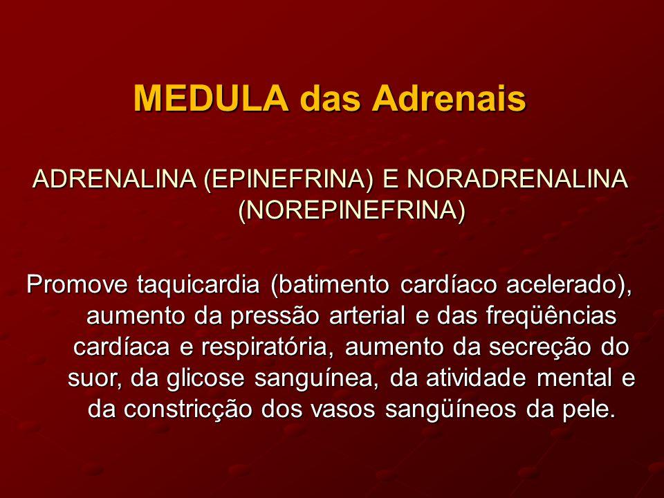 MEDULA das Adrenais ADRENALINA (EPINEFRINA) E NORADRENALINA (NOREPINEFRINA) Promove taquicardia (batimento cardíaco acelerado), aumento da pressão arterial e das freqüências cardíaca e respiratória, aumento da secreção do suor, da glicose sanguínea, da atividade mental e da constricção dos vasos sangüíneos da pele.