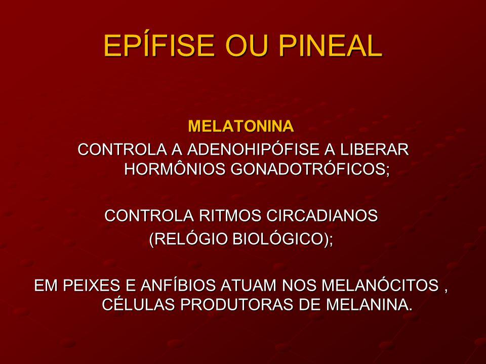EPÍFISE OU PINEAL MELATONINA CONTROLA A ADENOHIPÓFISE A LIBERAR HORMÔNIOS GONADOTRÓFICOS; CONTROLA A ADENOHIPÓFISE A LIBERAR HORMÔNIOS GONADOTRÓFICOS; CONTROLA RITMOS CIRCADIANOS (RELÓGIO BIOLÓGICO); EM PEIXES E ANFÍBIOS ATUAM NOS MELANÓCITOS, CÉLULAS PRODUTORAS DE MELANINA.