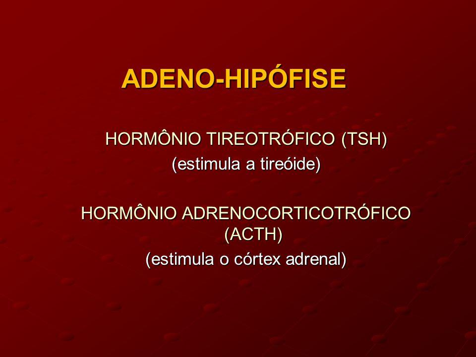 ADENO-HIPÓFISE HORMÔNIO TIREOTRÓFICO (TSH) (estimula a tireóide) HORMÔNIO ADRENOCORTICOTRÓFICO (ACTH) (estimula o córtex adrenal)