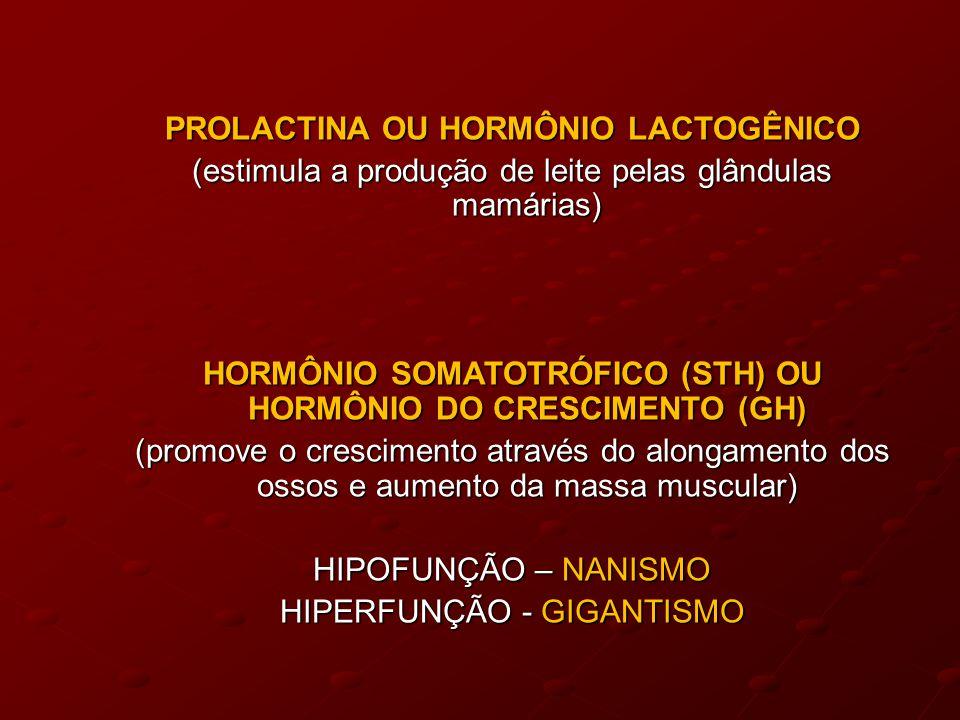 PROLACTINA OU HORMÔNIO LACTOGÊNICO (estimula a produção de leite pelas glândulas mamárias) HORMÔNIO SOMATOTRÓFICO (STH) OU HORMÔNIO DO CRESCIMENTO (GH) (promove o crescimento através do alongamento dos ossos e aumento da massa muscular) HIPOFUNÇÃO – NANISMO HIPERFUNÇÃO - GIGANTISMO