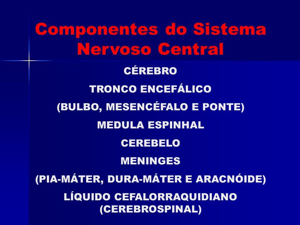 Componentes do Sistema Nervoso Central CÉREBRO TRONCO ENCEFÁLICO (BULBO, MESENCÉFALO E PONTE) MEDULA ESPINHAL CEREBELO MENINGES (PIA-MÁTER, DURA-MÁTER E ARACNÓIDE) LÍQUIDO CEFALORRAQUIDIANO (CEREBROSPINAL)