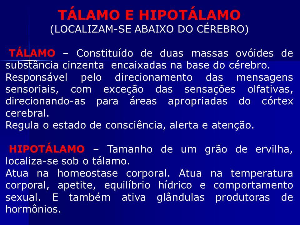TÁLAMO E HIPOTÁLAMO (LOCALIZAM-SE ABAIXO DO CÉREBRO) TÁLAMO – Constituído de duas massas ovóides de substância cinzenta encaixadas na base do cérebro.