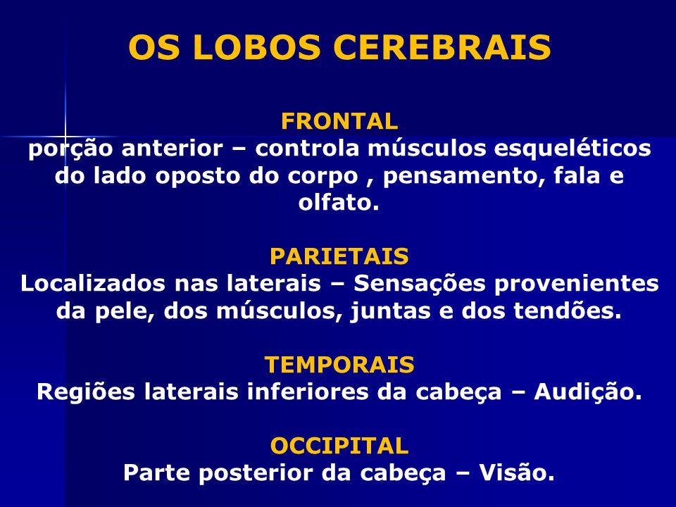 OS LOBOS CEREBRAIS FRONTAL porção anterior – controla músculos esqueléticos do lado oposto do corpo, pensamento, fala e olfato.