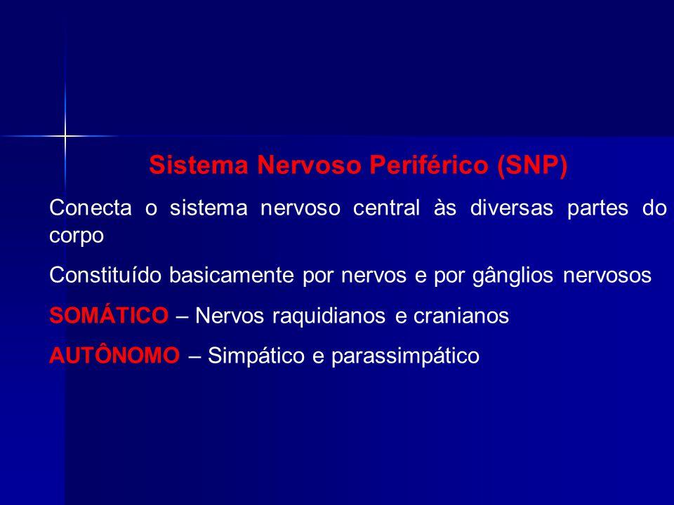 Sistema Nervoso Periférico (SNP) Conecta o sistema nervoso central às diversas partes do corpo Constituído basicamente por nervos e por gânglios nervosos SOMÁTICO – Nervos raquidianos e cranianos AUTÔNOMO – Simpático e parassimpático
