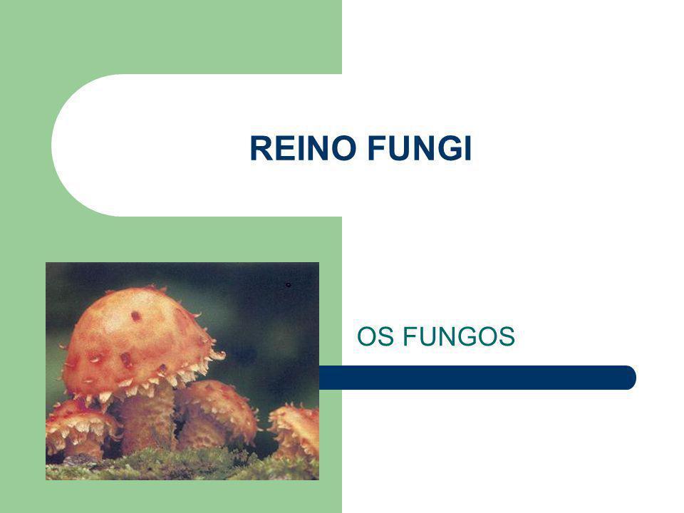 Os Liquens associação de fungos (ascomicetos) e algas (clorofíceas) mutualismo ou parasitismo equilibrado.