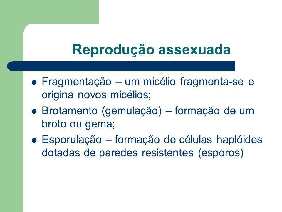 Reprodução assexuada Fragmentação – um micélio fragmenta-se e origina novos micélios; Brotamento (gemulação) – formação de um broto ou gema; Esporulaç