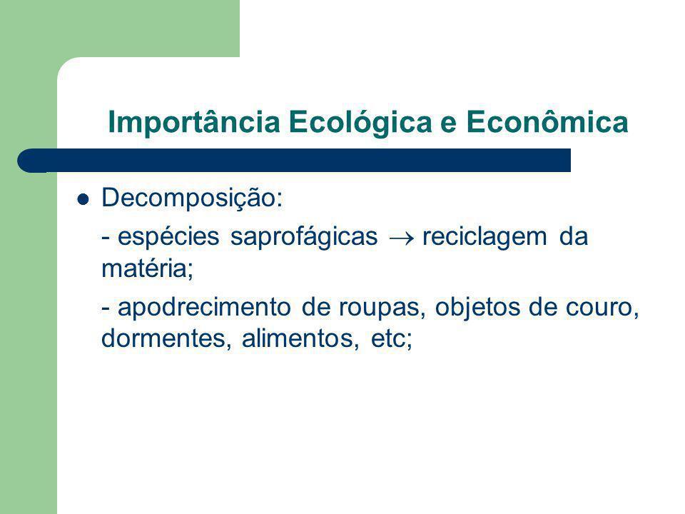 Importância Ecológica e Econômica Decomposição: - espécies saprofágicas reciclagem da matéria; - apodrecimento de roupas, objetos de couro, dormentes,