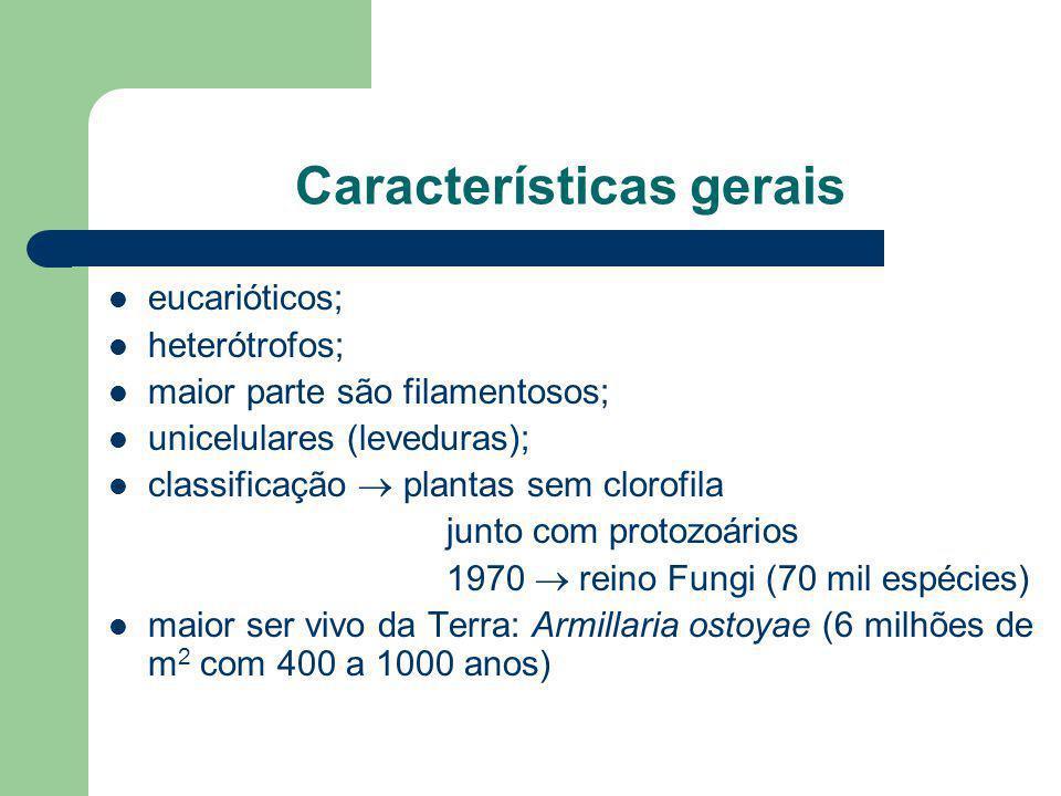 Características gerais eucarióticos; heterótrofos; maior parte são filamentosos; unicelulares (leveduras); classificação plantas sem clorofila junto c