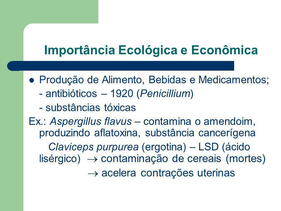 Importância Ecológica e Econômica Produção de Alimento, Bebidas e Medicamentos; - antibióticos – 1920 (Penicillium) - substâncias tóxicas Ex.: Aspergi