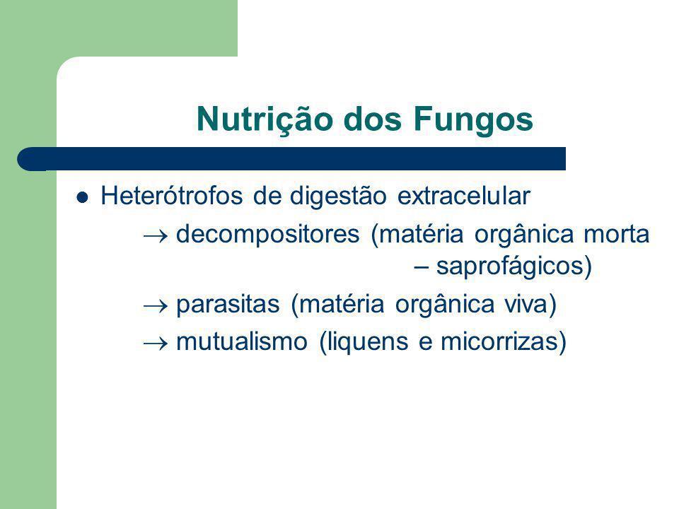 Nutrição dos Fungos Heterótrofos de digestão extracelular decompositores (matéria orgânica morta – saprofágicos) parasitas (matéria orgânica viva) mut