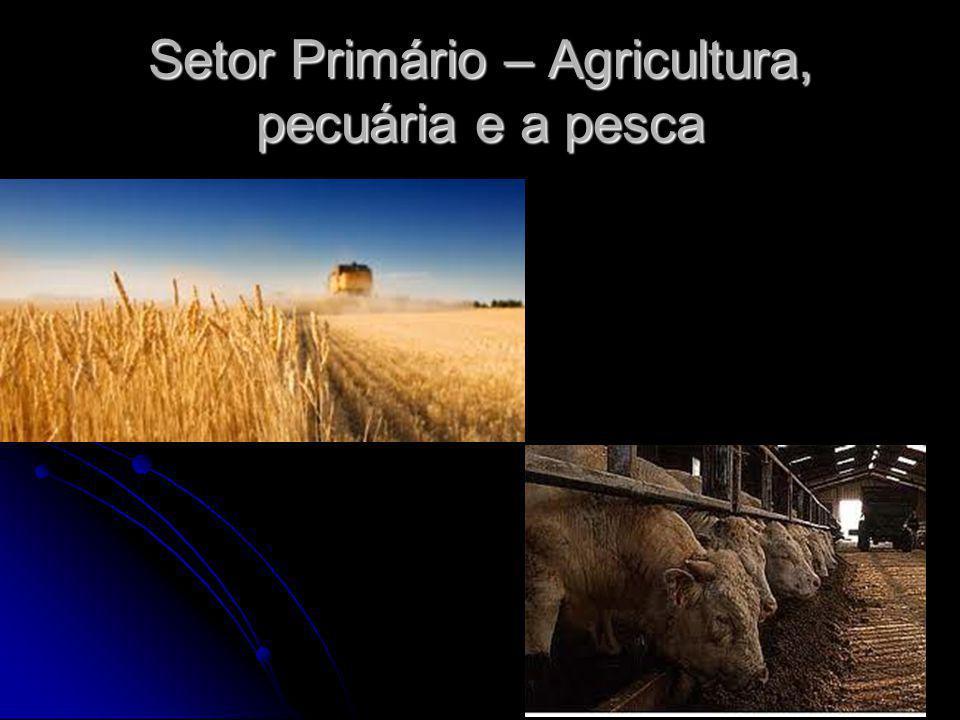 Setor Primário – Agricultura, pecuária e a pesca