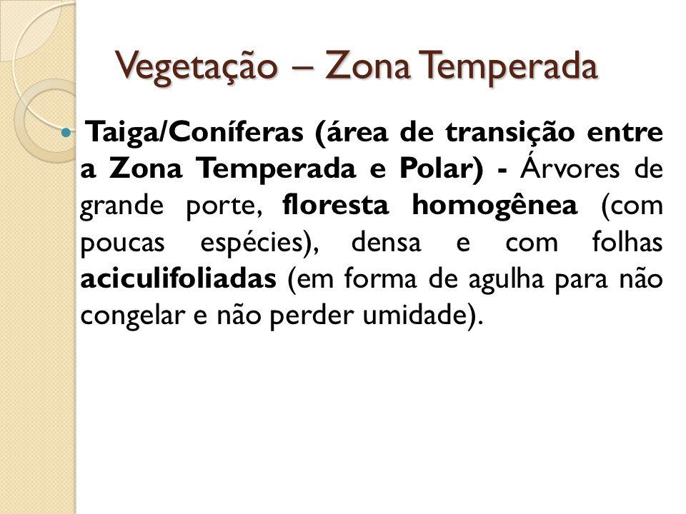 Vegetação – Zona Temperada Taiga/Coníferas (área de transição entre a Zona Temperada e Polar) - Árvores de grande porte, floresta homogênea (com poucas espécies), densa e com folhas aciculifoliadas (em forma de agulha para não congelar e não perder umidade).