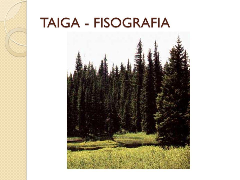 TAIGA - FISOGRAFIA