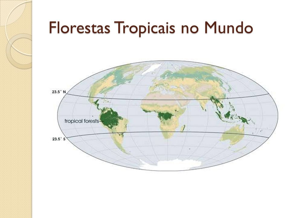 Florestas Tropicais no Mundo