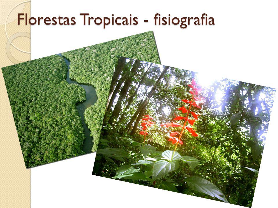 Florestas Tropicais - fisiografia