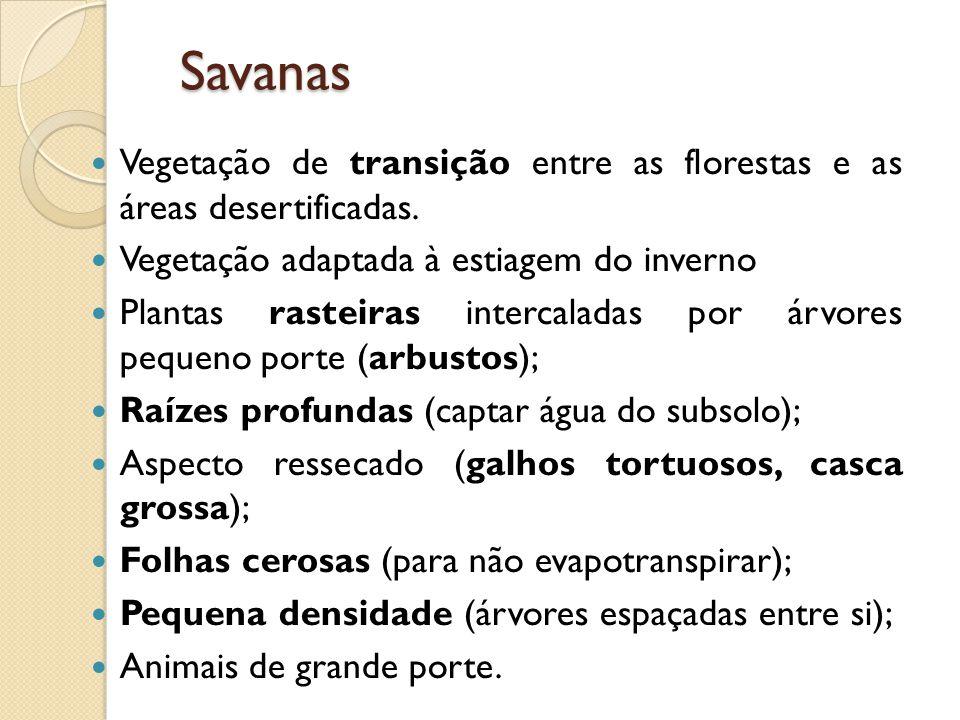 Savanas Vegetação de transição entre as florestas e as áreas desertificadas.