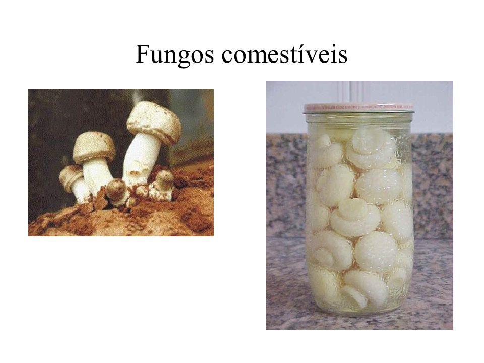Fungos comestíveis