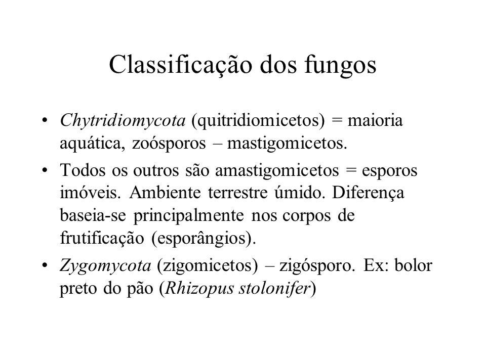 Classificação dos fungos Chytridiomycota (quitridiomicetos) = maioria aquática, zoósporos – mastigomicetos. Todos os outros são amastigomicetos = espo