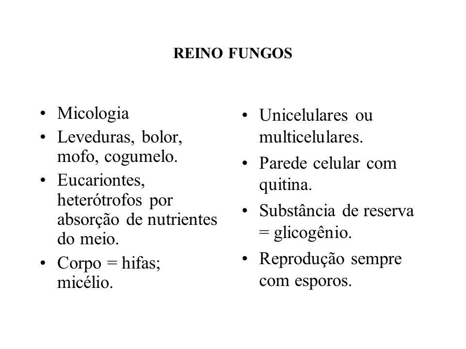 REINO FUNGOS Micologia Leveduras, bolor, mofo, cogumelo. Eucariontes, heterótrofos por absorção de nutrientes do meio. Corpo = hifas; micélio. Unicelu