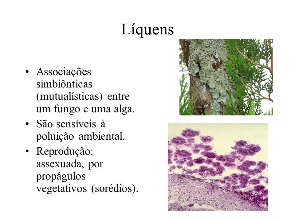 Líquens Associações simbiônticas (mutualísticas) entre um fungo e uma alga. São sensíveis à poluição ambiental. Reprodução: assexuada, por propágulos