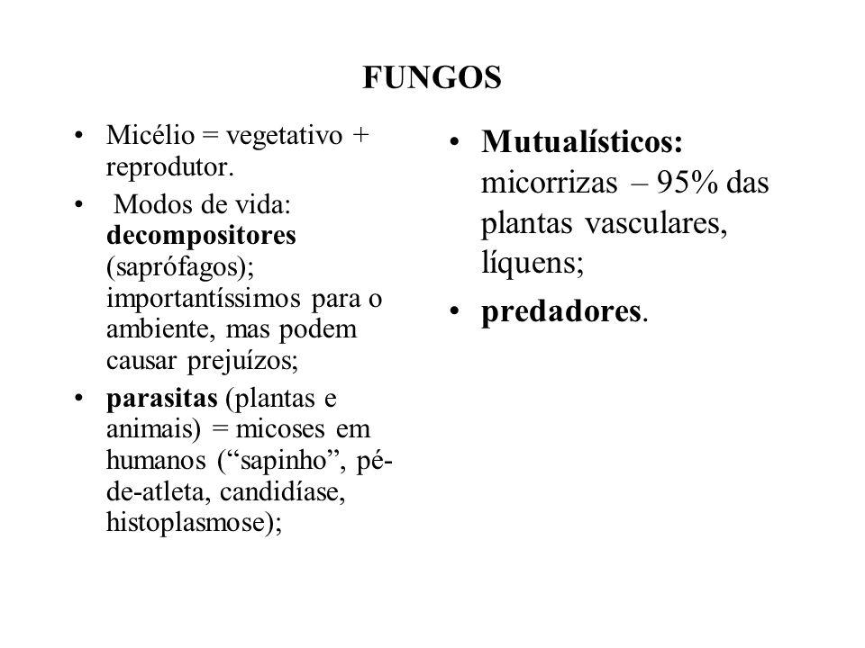 FUNGOS Micélio = vegetativo + reprodutor. Modos de vida: decompositores (saprófagos); importantíssimos para o ambiente, mas podem causar prejuízos; pa
