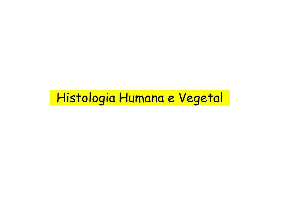 Histologia Humana e Vegetal