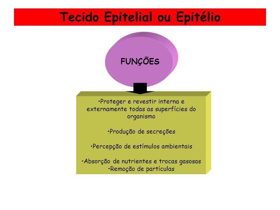 Tecido Epitelial ou Epitélio Proteger e revestir interna e externamente todas as superfícies do organismo Produção de secreções Percepção de estímulos