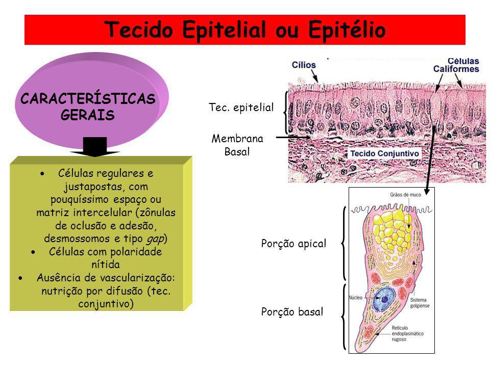 Tecido Epitelial ou Epitélio Células regulares e justapostas, com pouquíssimo espaço ou matriz intercelular (zônulas de oclusão e adesão, desmossomos