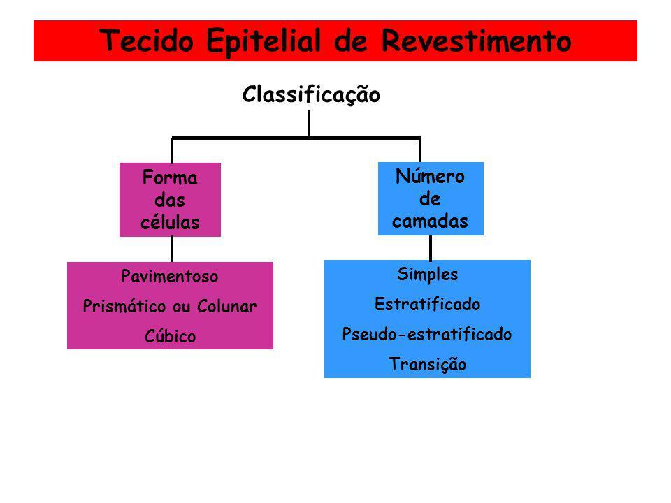 Tecido Epitelial de Revestimento Classificação Forma das células Pavimentoso Prismático ou Colunar Cúbico Número de camadas Simples Estratificado Pseu